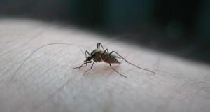 Apsauga nuo vabzdžių: į ką atkreipti dėmesį renkantis priemones