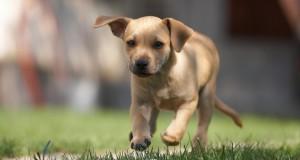 Įrodyta teigiama šuns įtaka žmogaus kraujospūdžiui
