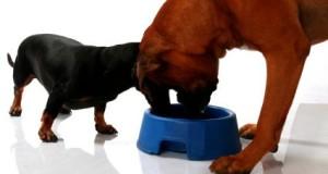 Kokios košės labiausiai tinka šunims?