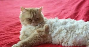 Ką reikėtų žinoti apie kačių mitybą?