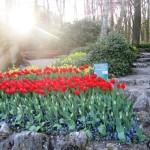 Gėlių rojus Olandijoje