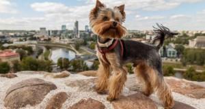 Vilniuje nebeliks rinkliavos už gyvūnų laikymą daugiabučiuose
