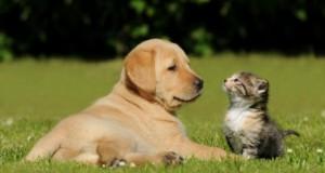 Kaune atsisakyta mokesčio už šunų ir kačių laikymą