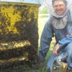 Įkvėpimo šaltinis – muzika ir bitės
