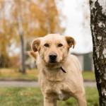 """Rasti namus beglobiams šunims padės projektas """"Gyvenimo mokykla prieglaudinukams"""""""