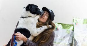 Beglobius šunis mokys gero elgesio ir tvarkos