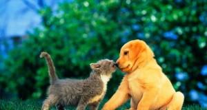 Naujųjų metų pradžioje prasideda gyvūnų ženklinimas
