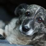 Savanorystė gyvūnų prieglaudoje tapo gyvenimo būdu