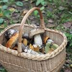 Daug diskusijų kėlusios grybavimo taisyklės panaikintos