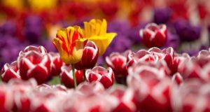 Burbiškio dvare karaliaus muzika, mada ir tulpės