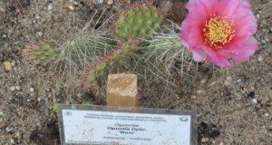 VDU botanikos sode pražydo botaninės retenybės
