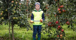 """Vaikų psichiatras Linas Slušnys: """"Vaikų pažintis su sveika mityba turėtų prasidėti ūkiuose"""""""