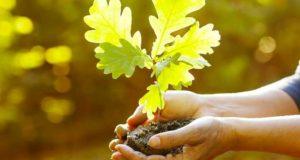 Socialinė iniciatyva: lietuviai kviečiami sodinti milijoną ąžuolų