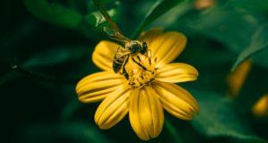 Vabzdžių įgėlimai: kada reikia medikų pagalbos?